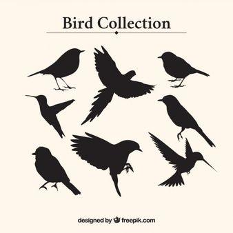 La collecte des silhouettes d'oiseaux