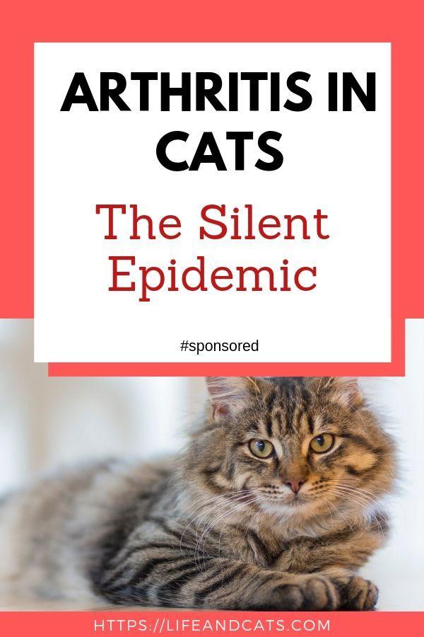 Arthritis In Cats Arthritis Cat Health Cat Health Problems