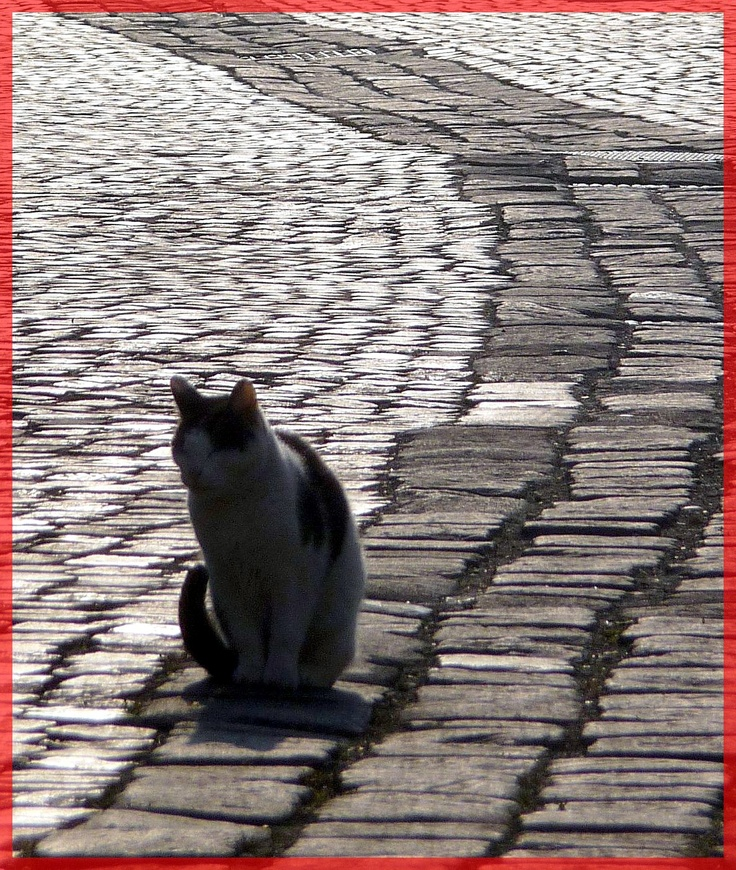 Szentendre (Hungary). Lonely Cat on the road.