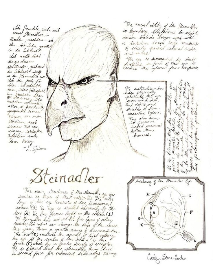 Steinadler Drawing from Grimm Episode 113