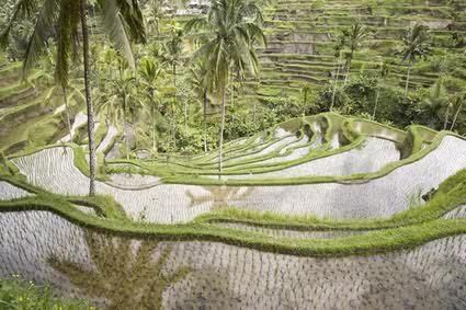 Beautiful rice terrace. http://www.balisurfwaves.com/