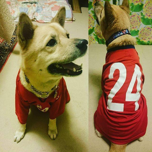 「俺試合出たいっす❗」 #愛犬 #愛犬は家族 #犬スタグラム #dog  #dogstagram #長男ジュニアの時のユニホーム #スーパーサブ #サイドバックできそう⚽