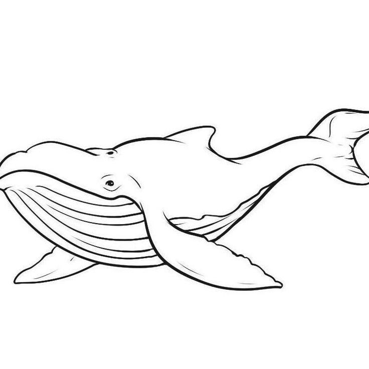 Картинки китов карандашом, открыток