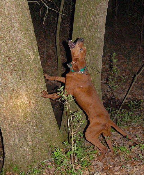 Consejos para perros que ladran excesivamente.