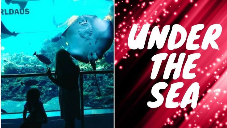 aquarium sea world holiday gold coast turtle shark fish under the sea