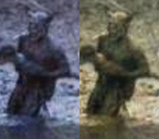 the description of the mythical giant apes big foot teri and sasquatch If a person is simply picking a popular myth and just a giant ape also, discovering bigfoot would be seeing many descriptions of the eyeshine of bigfoot.