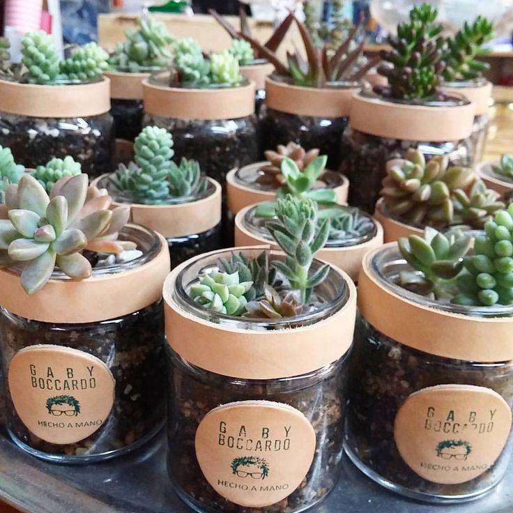 Suculentas en frascos de vidrio con borde de cuero - Decoracion de plantas ...