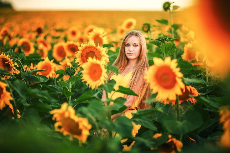 Sunflowers par Sergey Shatskov