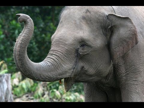 ELEPHANTS: Animals for children. Kids videos. Kindergarten | Preschool learning - YouTube