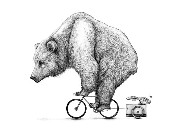 Bear Biking by AMY DOVER - Illustration for cycling store, Saddle and Spoke.
