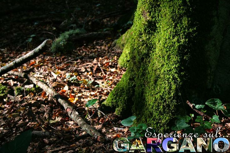 Foresta Umbra, Parco Nazionale del Gargano.  #ForestaUmbra #ParcoNazionaleDelGargano #EsperienzeGargano #MyGarganoExperience #Gargano #Puglia #Natura #relax #animali #nature #apulia #animal #world #travelexperiences #travel #travelblogger #vacation #traveling