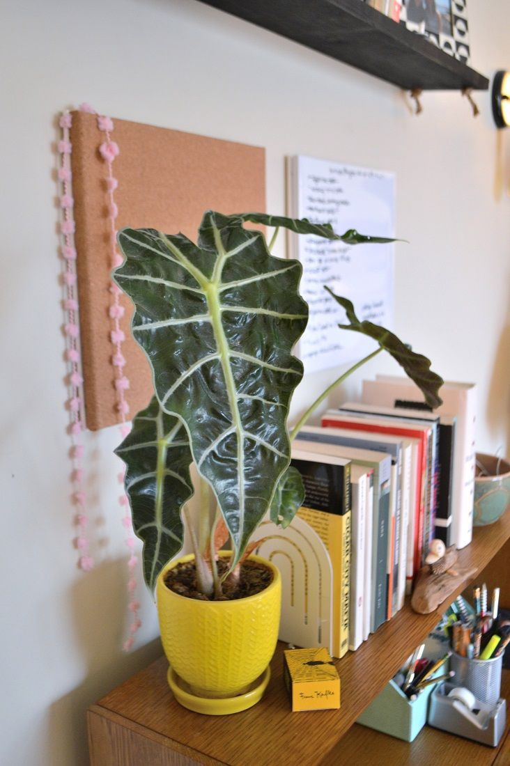 Guide to Developing Your Apartment Green Thumb