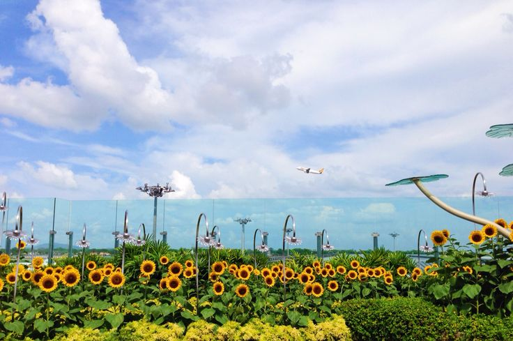 Terminal 2, Changi international airport.
