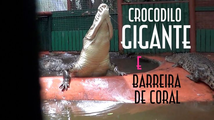 Crocodilo Gigante e Barreira de Coral na Australia - EMVB - Emerson Mart...