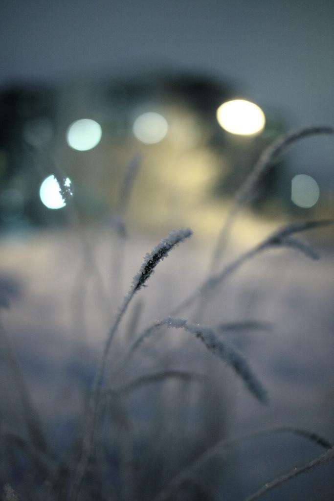 Snowy Bokeh