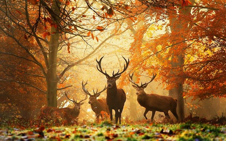 Deers at autumn forest
