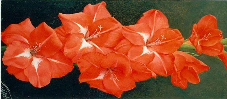 Voerman jr. J.  | Jan Voerman jr., Gladiool, olieverf op doek 50,2 x 22,5 cm, gesigneerd l.o.