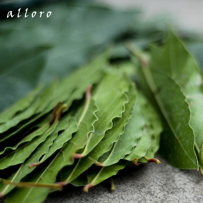 foglie di alloro. laurel leaf