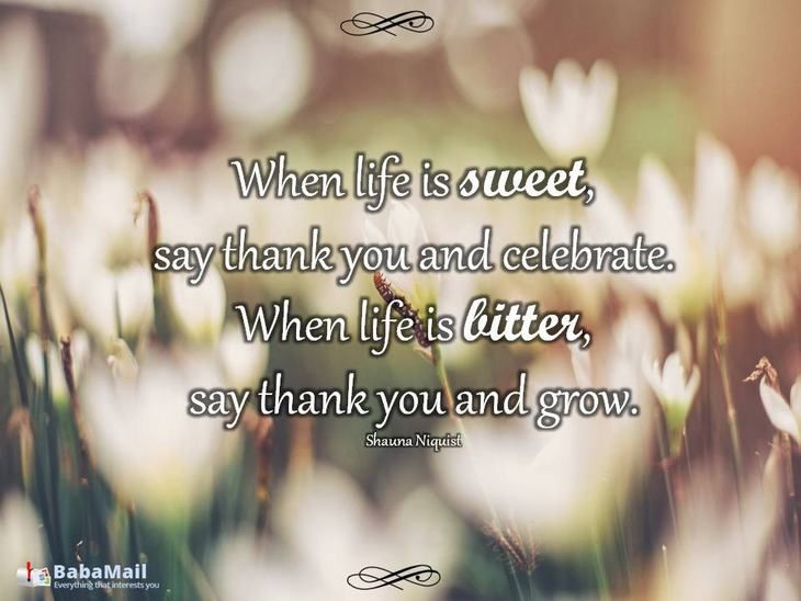 65 Best Admiration Quotes Sayings: 1000+ Appreciation Quotes On Pinterest