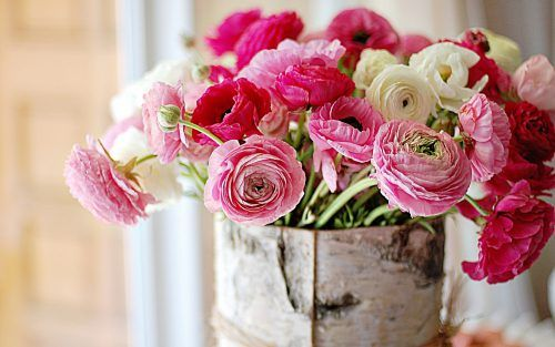 Flowers that look like roses - Ranunculus