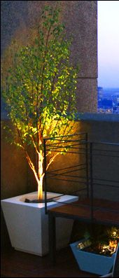 plant a Silver birch tree