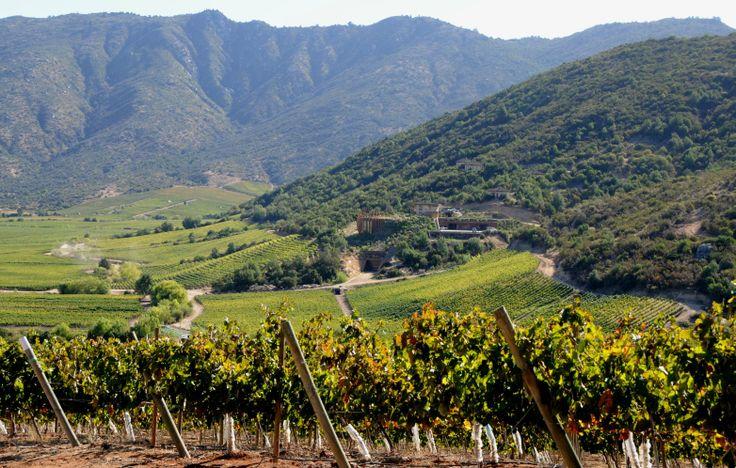Viña Lapostolle Chile. Home Clos Apalta Wine