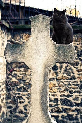 This is a Gothic Cat in Paris  -- Paris - cimetière de Montmartre