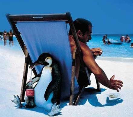 Foto Divertente: Pinguino al mare