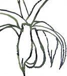 Frans Kwakkenbos - Planten en bloemen