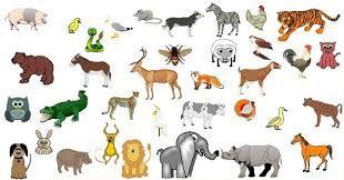Resultado de imagen para animales en ingles