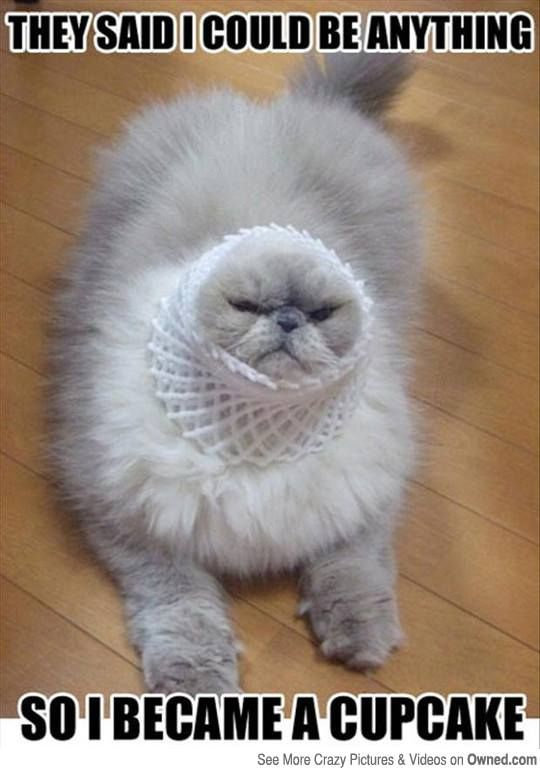 They said I could be anything... So I became a cupcake.