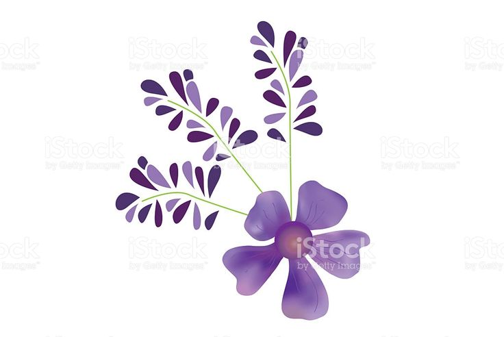 Lavender flower royalty-free stock illustration
