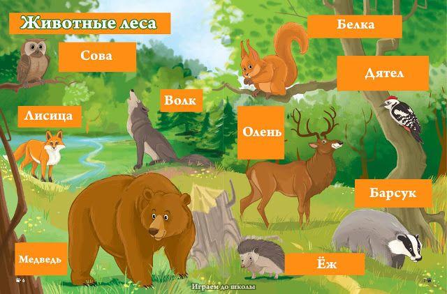 Играем до школы: Наглядный плакат для детей Животные леса