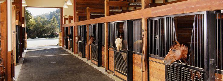 horses-in-stables.jpg (1920×700)