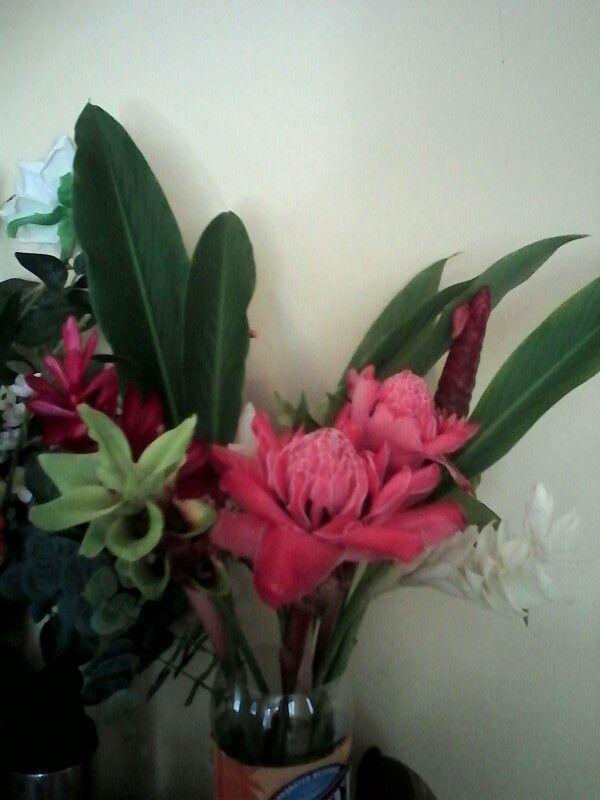Brasil lilies