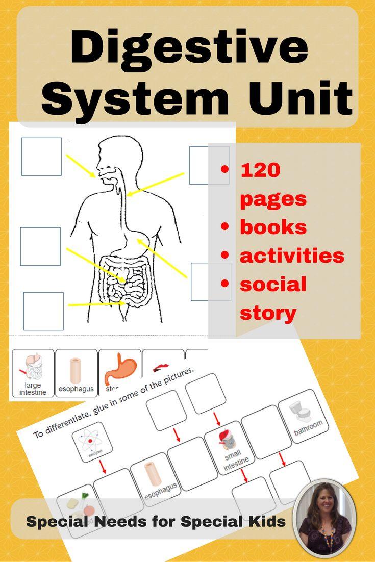 Digestive system lesson high school