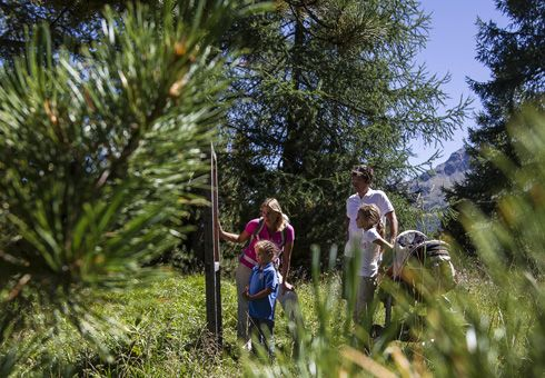 Heidi's Flower, hike, Engadin St. Moritz, Grisons, Switzerland