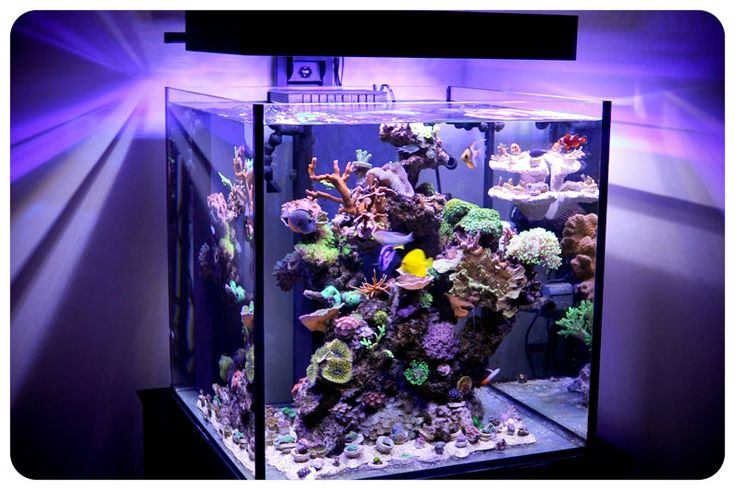 """This beautiful cube aquarium measures 24""""x24""""x24"""", is a 60 gallon rimless Solana aquarium and is illuminated with a 24"""" Panorama LED fixture by Ecoxotic.  The LED fixture is accented with two 453nm Blue Panorama LED modules and one 453nm Stunner LED strip.  The creative aquascaping creates a stunning reef tank shows off the corals extremely well."""