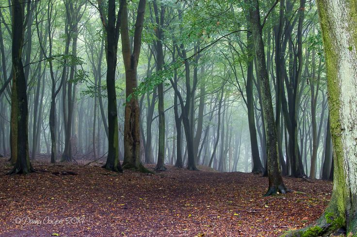 Ashridge Meet | Dunstable Camera Club