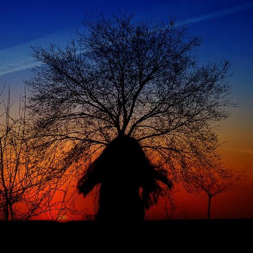 Noa, el viento y el árbol