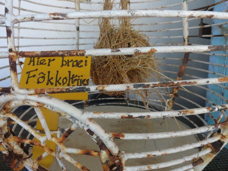 """Bokkom Laan In Velddrif, West Coast, South Africa.  Says """"sweet nothings are breeding here' in Afrikaans."""