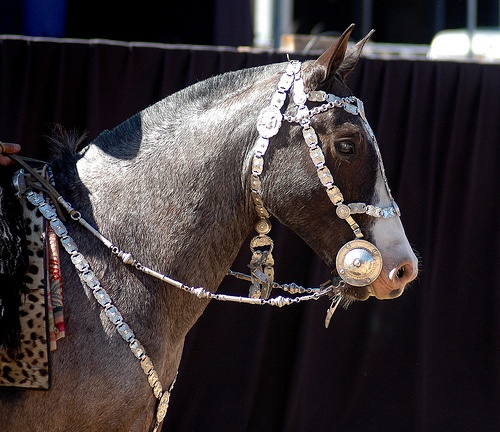 bay roan with silver by Martina V., via Flickr