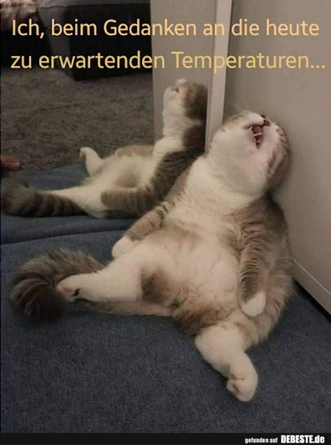 Me, at the thought of today's expected temperatures … | Funny pictures, sayings, jokes, really funny