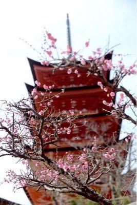 厳島神社挙式 : ☆幸せな一日☆ 五重の塔とも絵になりますね