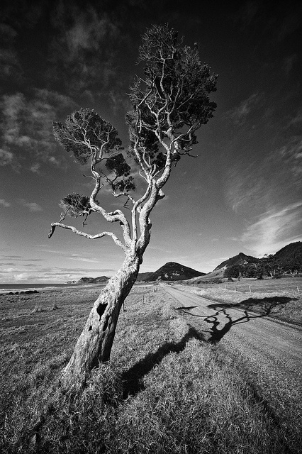 Long Shadows - [EXPLORE] by J Howe, via Flickr - Long Shadows from our East Cape Road Trip - Images and thoughts on Leica gear, Film vs. Digital, B and much more. Also includes 7 LFI Leica Fotografie International Master Shots. - aperturepriority.co.nz/2012/07/17/the-east-cape-road-trip/