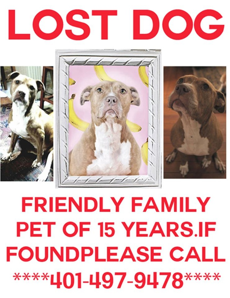 50 best ATTENTION FOUND, MISSING, OR STOLEN PETS [HELP US ...