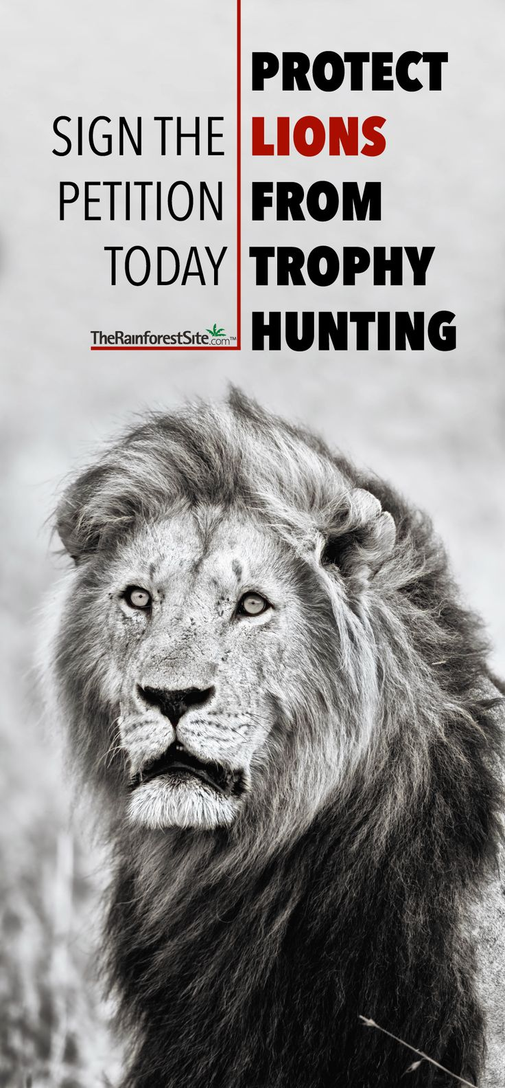 RIP CECIL! Protect Lions From Cruel Trophy Hunting Tell the International Union for Conservation of Nature that vulnerable species shouldn't be allowed in game hunts. SIGN THE PETITION TODAY! @therainforestsite
