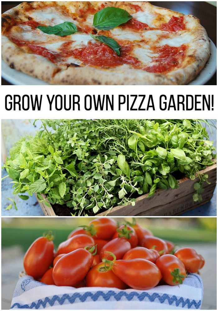 17 best images about home gardening on pinterest gardens Garden city pizza