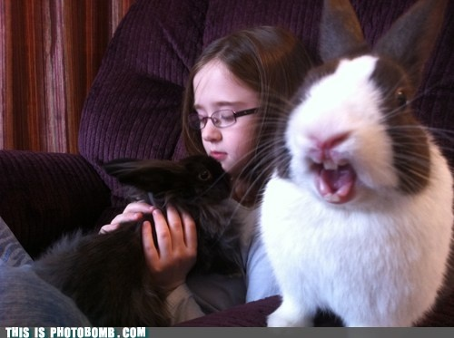 Best Animal Photobombs Images On Pinterest Funny Pics Funny - 35 hilarious animal photobombs ever