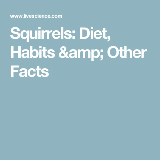 Squirrels: Diet, Habits & Other Facts